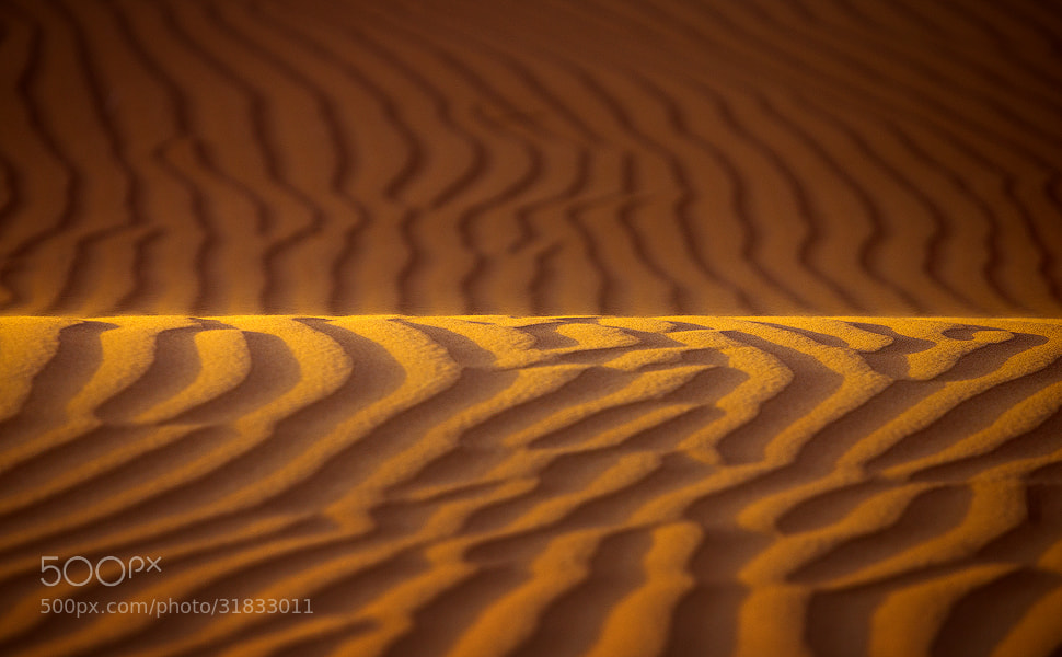 Photograph Golden Line  by Mohamed Al Jaberi on 500px