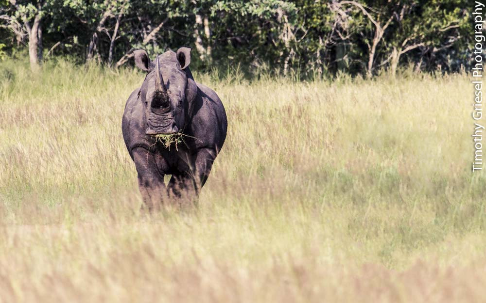 Photograph Big Boy by Timothy Griesel on 500px