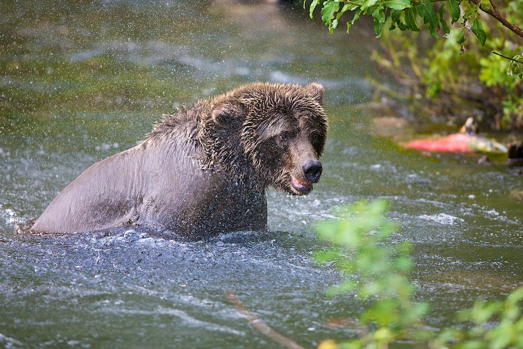 Photograph After The Splash In by Buck Shreck on 500px