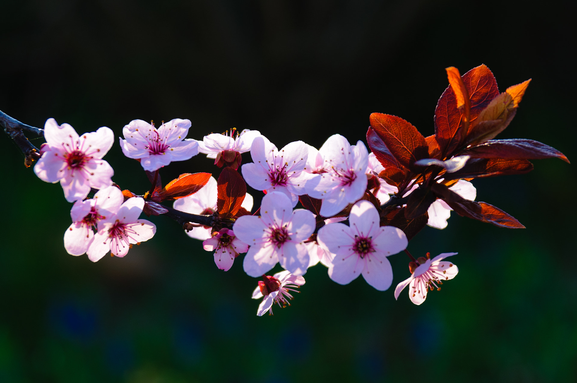Photograph Spring by Ernst Gamauf on 500px