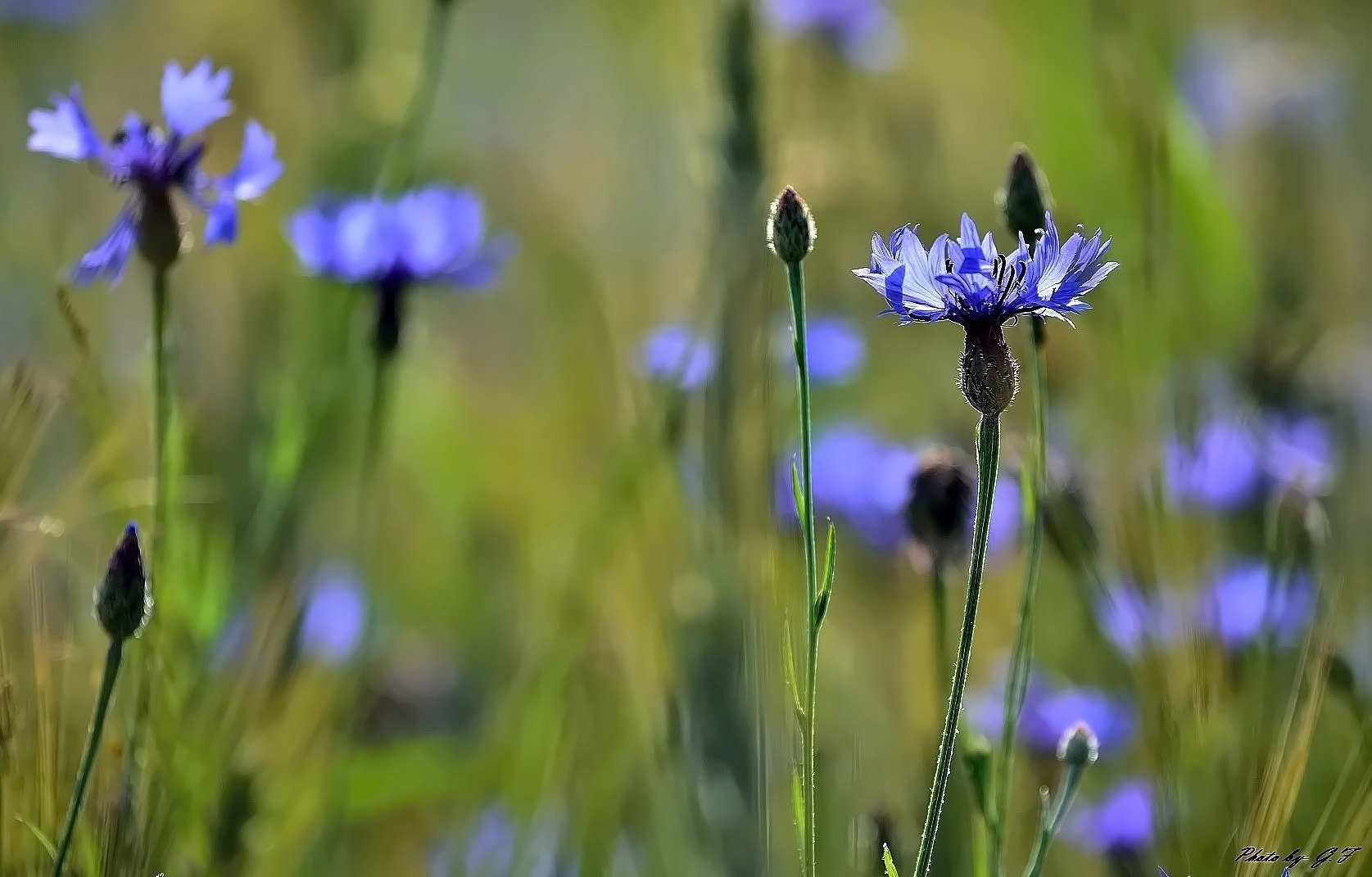 Photograph  Meadow flowers by Ferenc Gelencsér on 500px
