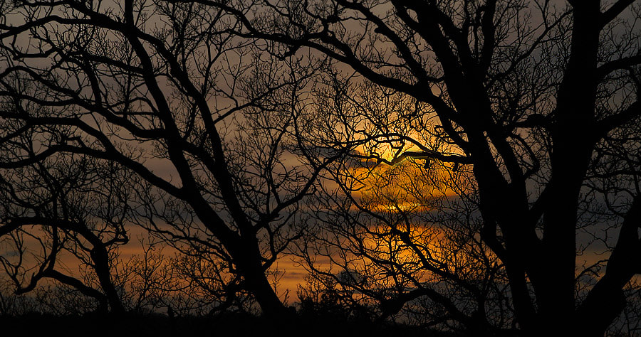 Photograph Sun Down in the New Forest  by John More on 500px