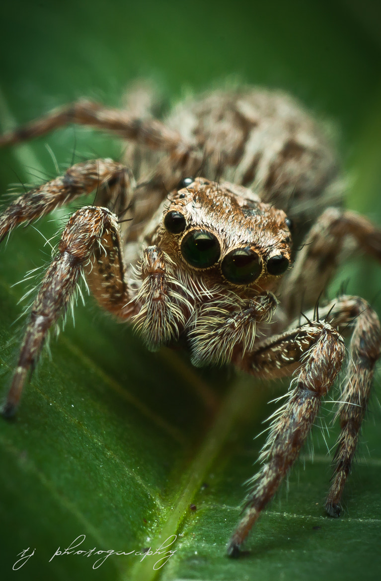 Photograph jumper jumper by Ting Teck Jong on 500px