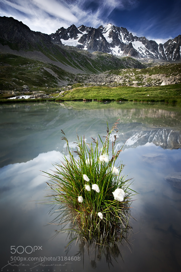 Photograph Alpine garden by Xavier Jamonet on 500px