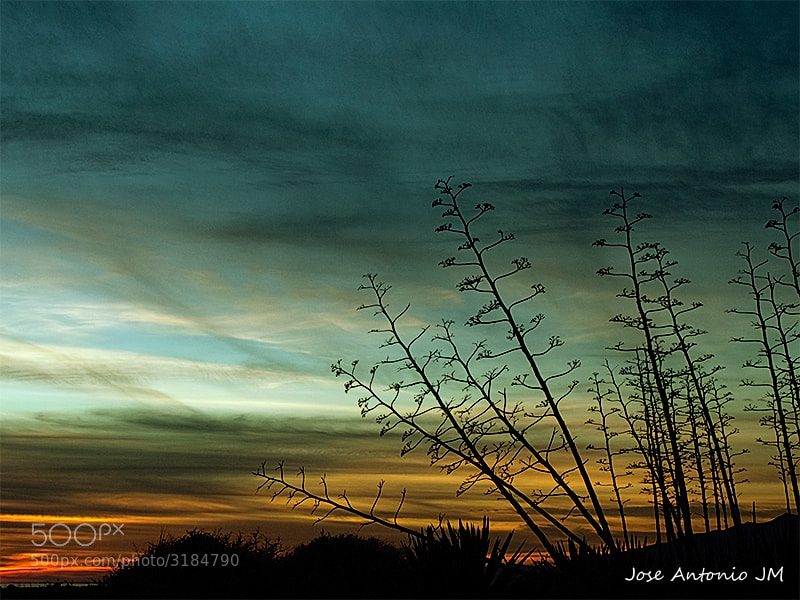 Photograph Sunset with agaves by Jose A. Jerez on 500px