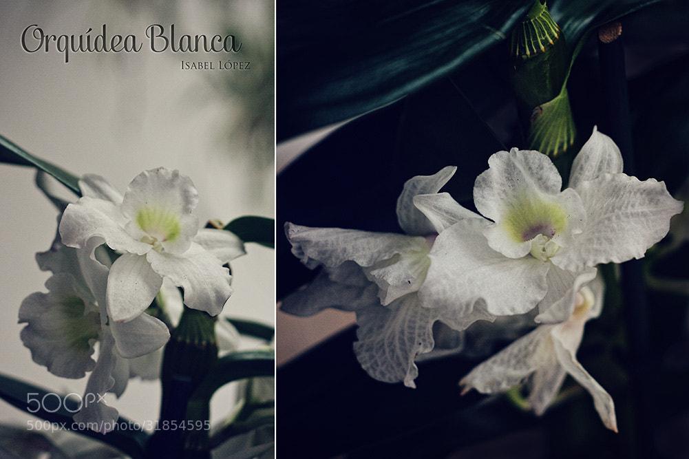 Photograph Orquídea Blanca by Isabel  López on 500px
