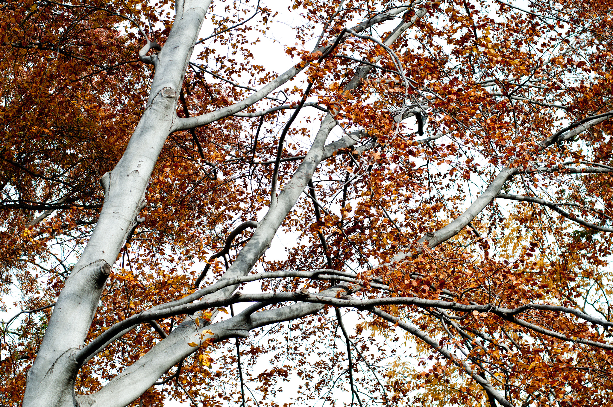 Photograph Silver Tree - Central Park by Kurt Nelson on 500px