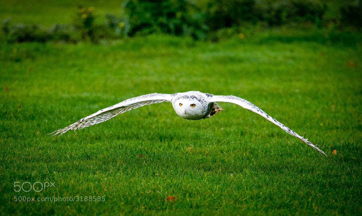 Photograph Low Flight by Mauri  on 500px