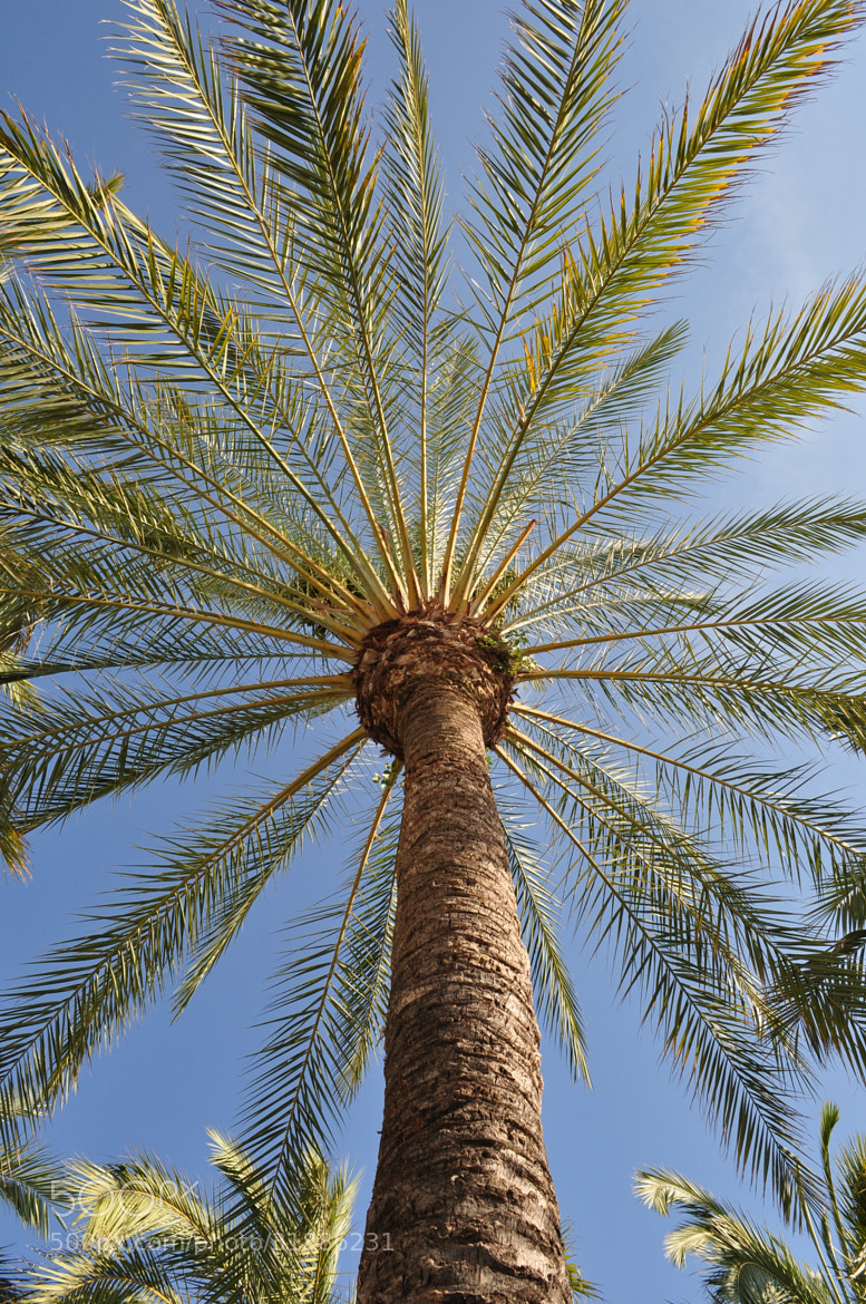Photograph Palm tree by Vasyl Slyvka on 500px