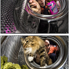 Постер, плакат: Could I wash a cat in the washing machine