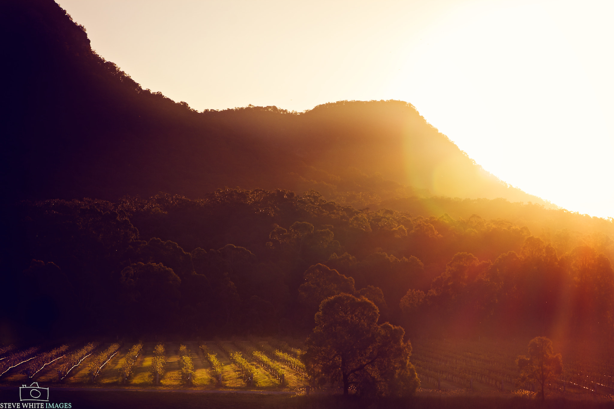 Photograph Sunset over Vineyard by Steve White on 500px