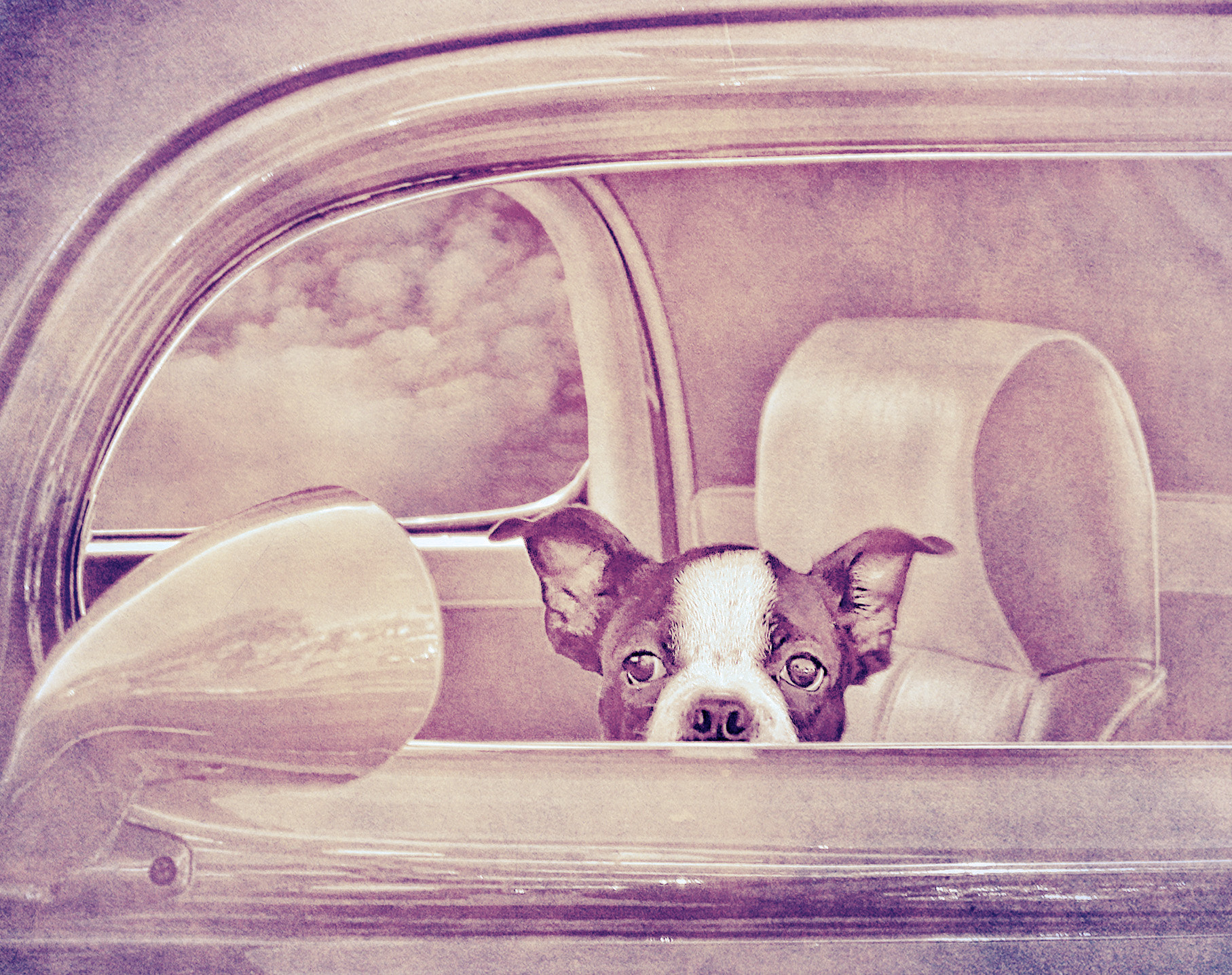 Photograph This Dog is in the Driver's Seat by Andy Graham on 500px