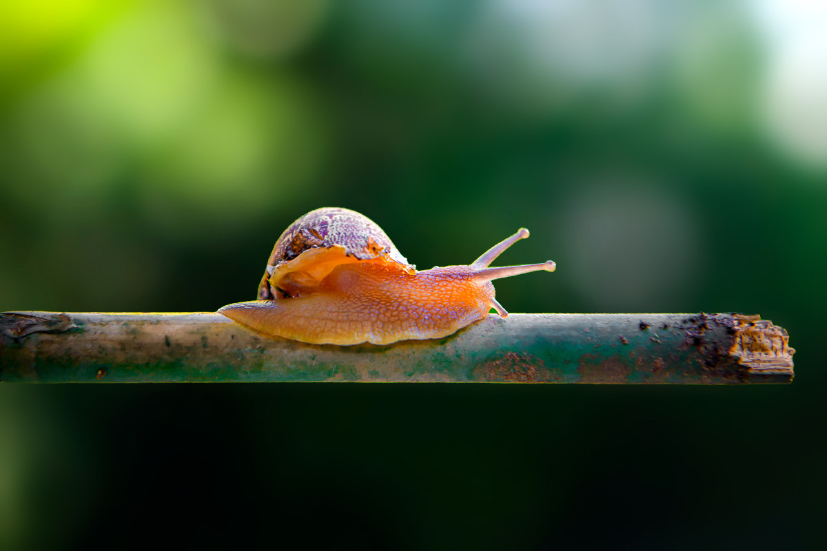 Photograph Mr. Snail by Chris Riesta on 500px