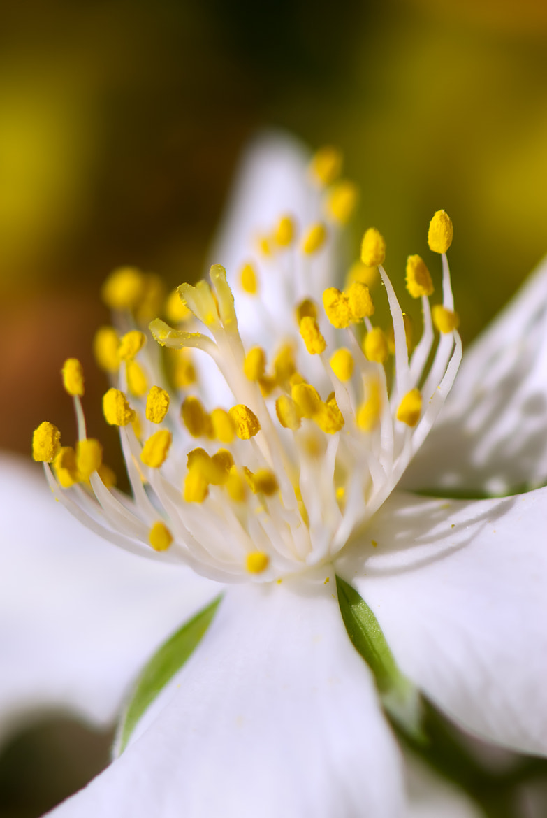 Photograph Macro by Lubomir Marcak on 500px