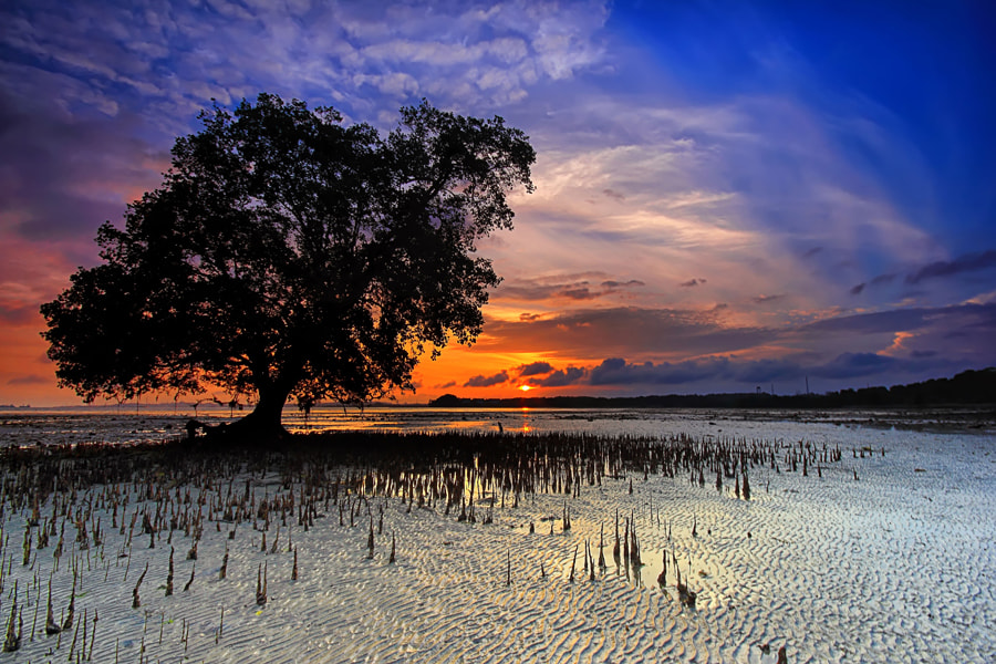 Photograph Satu Pohon by Danis Suma Wijaya on 500px