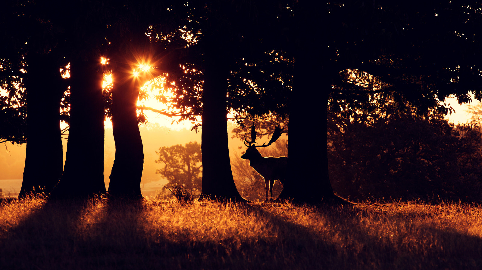 Photograph twinkle by Mark Bridger on 500px