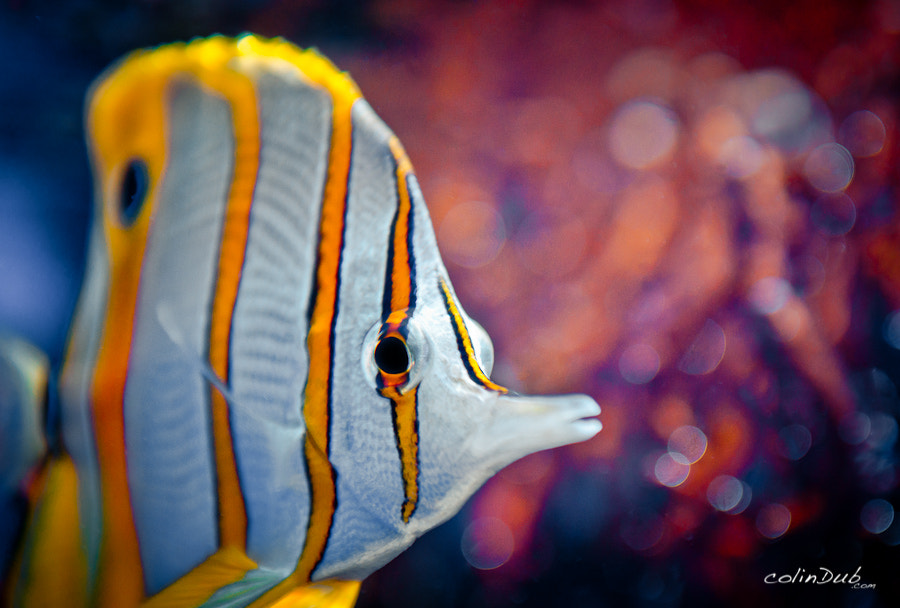 Photograph Fishy in Headlights by Colin Wojno on 500px