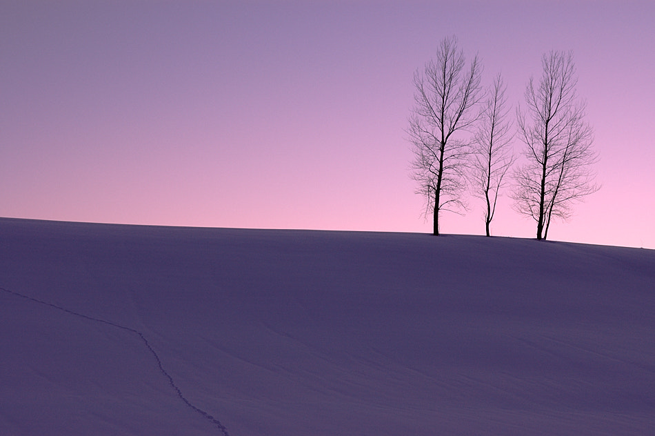 Photograph Scenery of Lavender Colors  by Kent Shiraishi on 500px