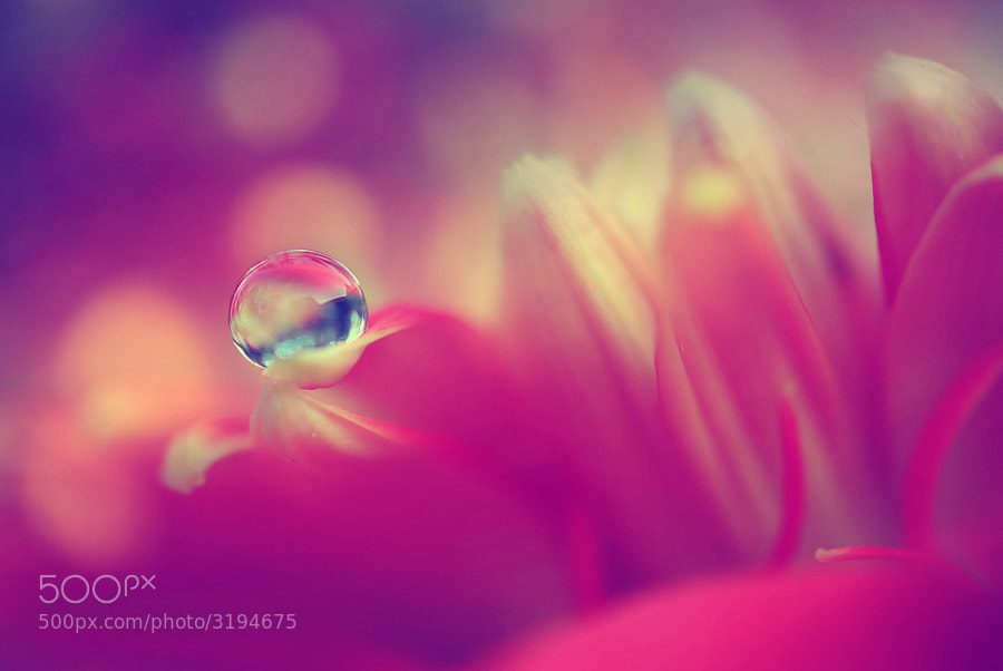 Photograph In the depht of pink by Diens Silver on 500px