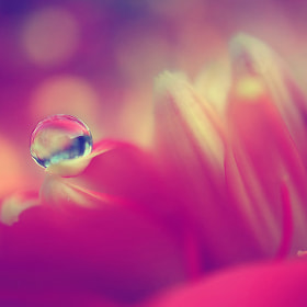 In the depht of pink by Diens Silver (diensilver)) on 500px.com