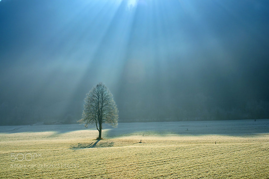 Photograph Backlight by Janez Tolar on 500px