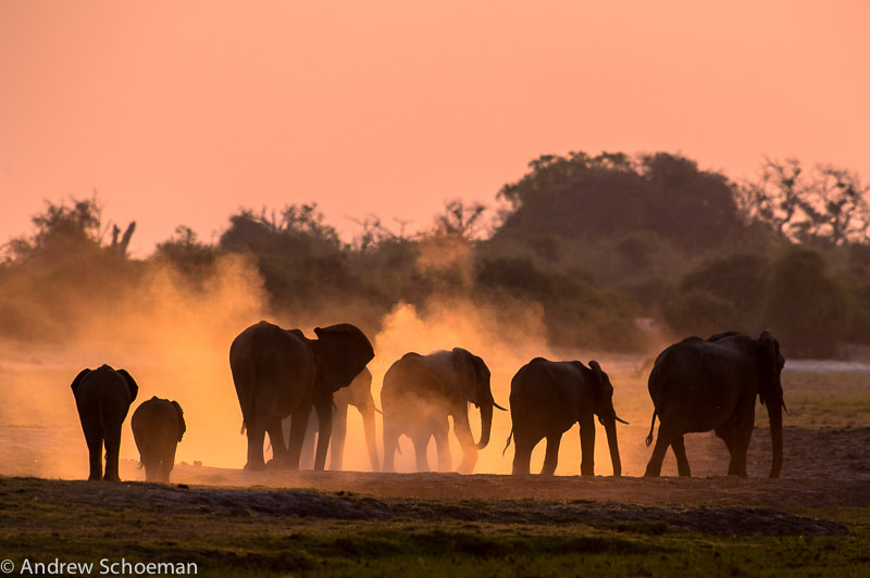 Photograph Ellie dust by Andrew Schoeman on 500px