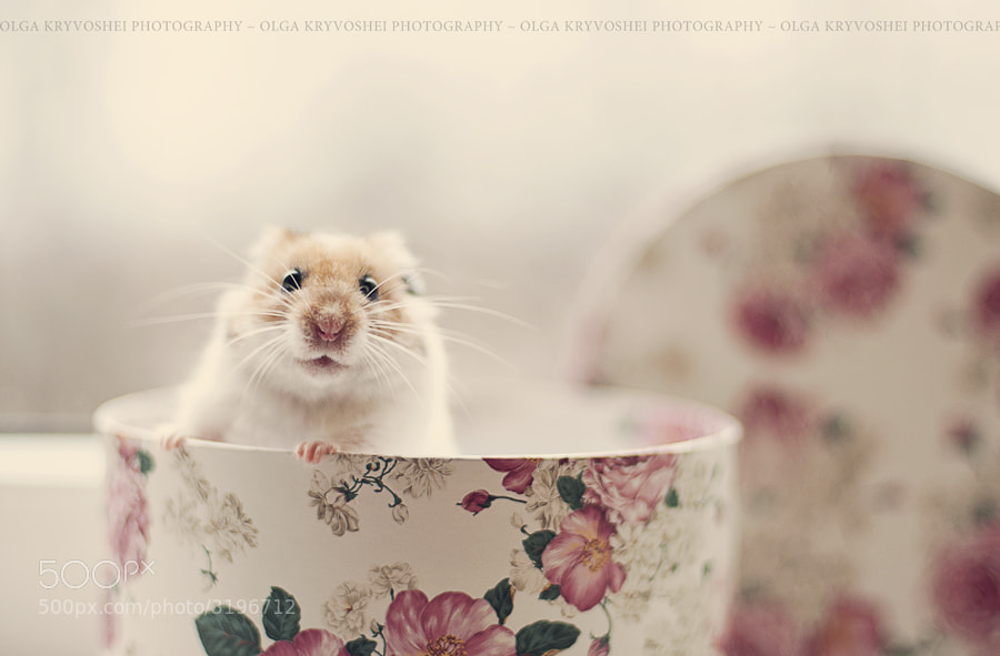 Photograph Tobi by Olga  Kryvoshei on 500px