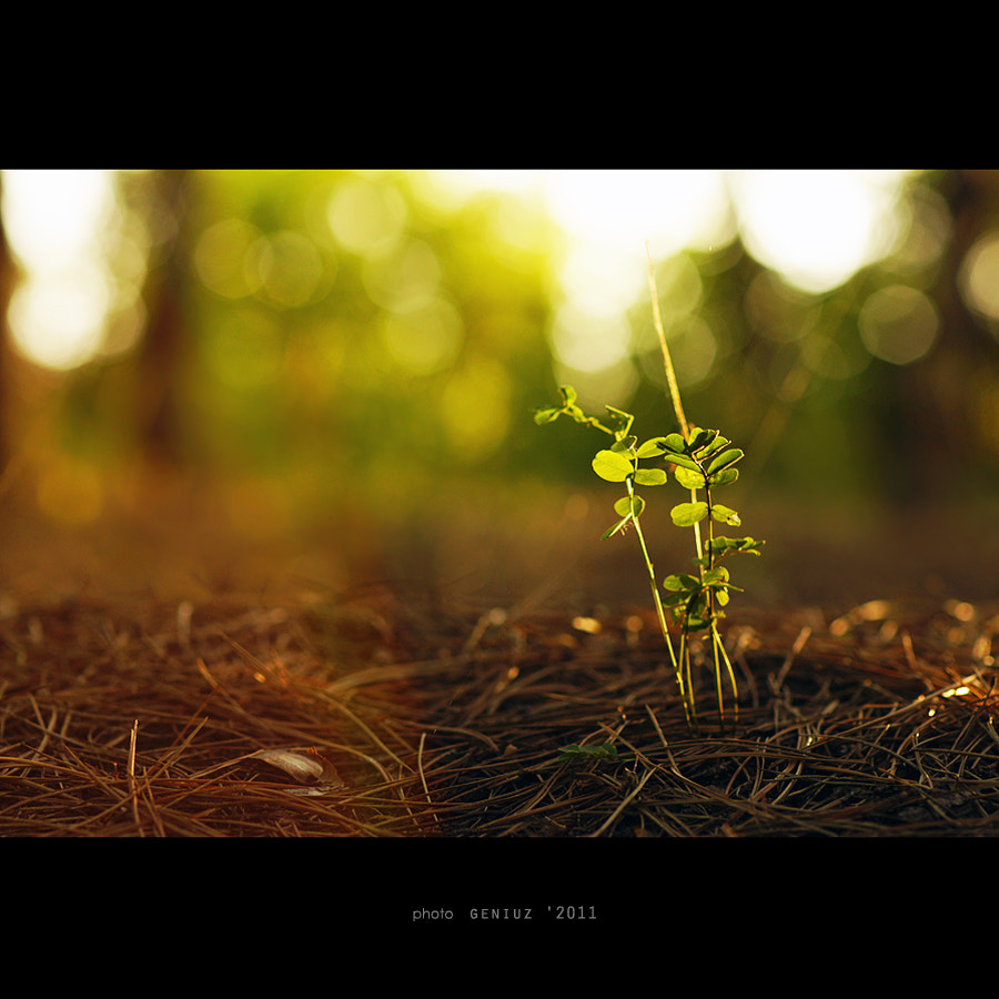Photograph sprout by Alexander Mihailov on 500px
