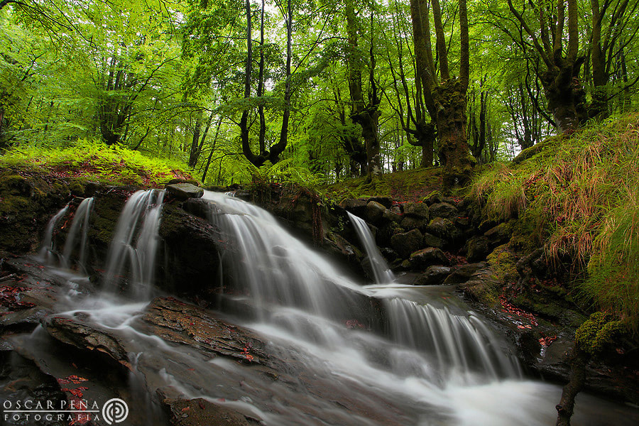Photograph - Spring water - by Oscar  Peña on 500px