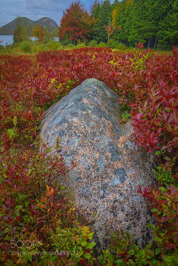 Taken in Acadia National Park.