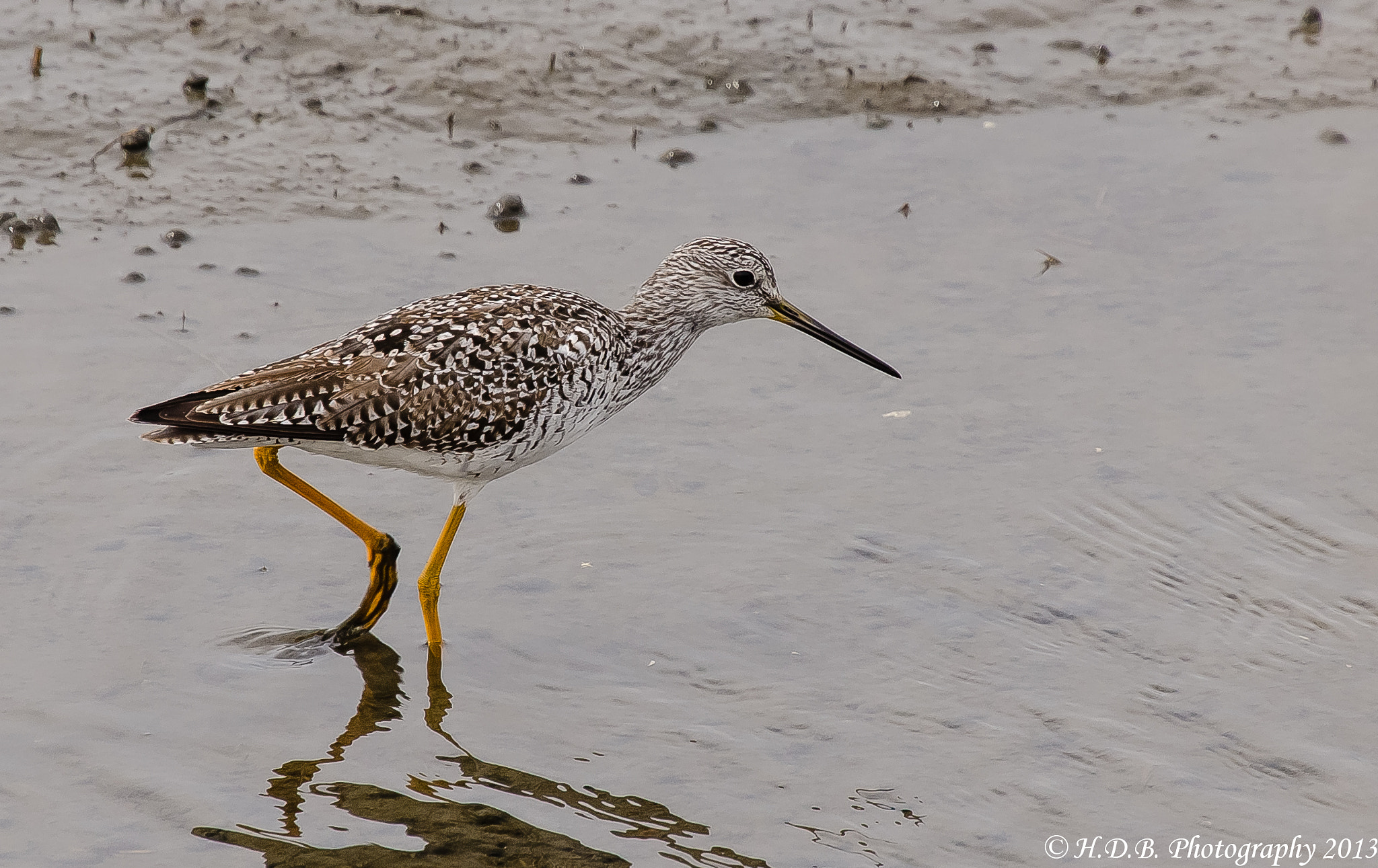 Photograph Yellow Legs by Harold Begun on 500px