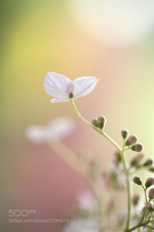Photograph Pastel Simplicity by Donna  R on 500px