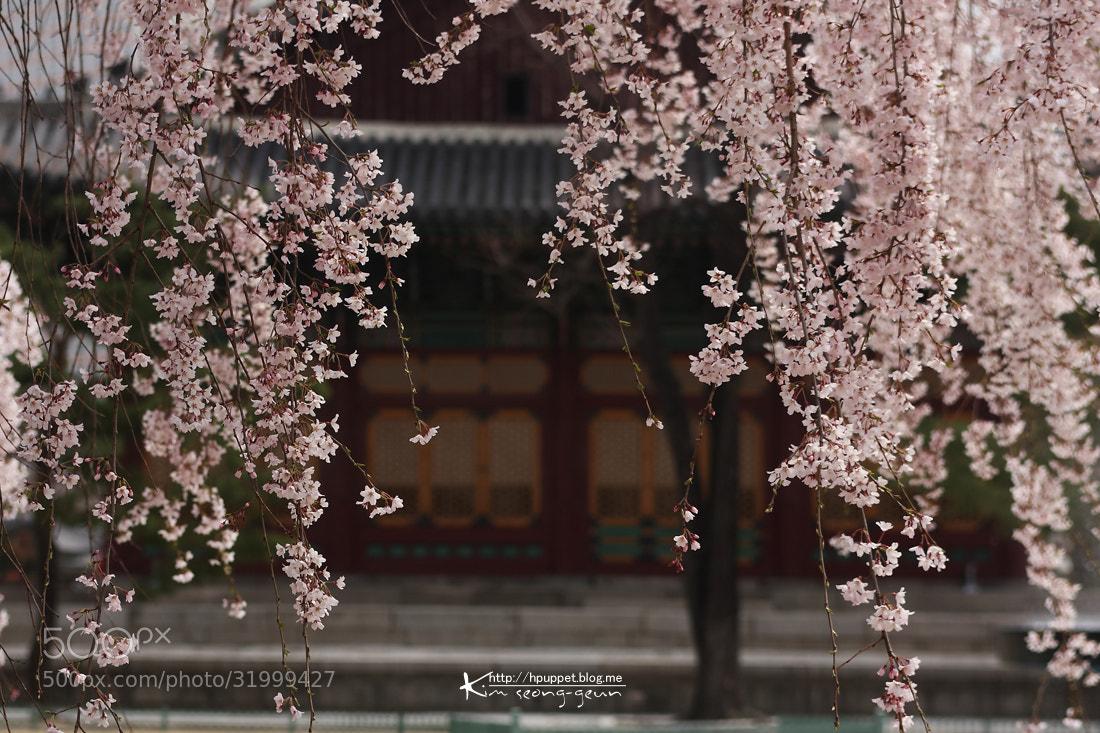 Photograph Cherry by kim seong-geun on 500px