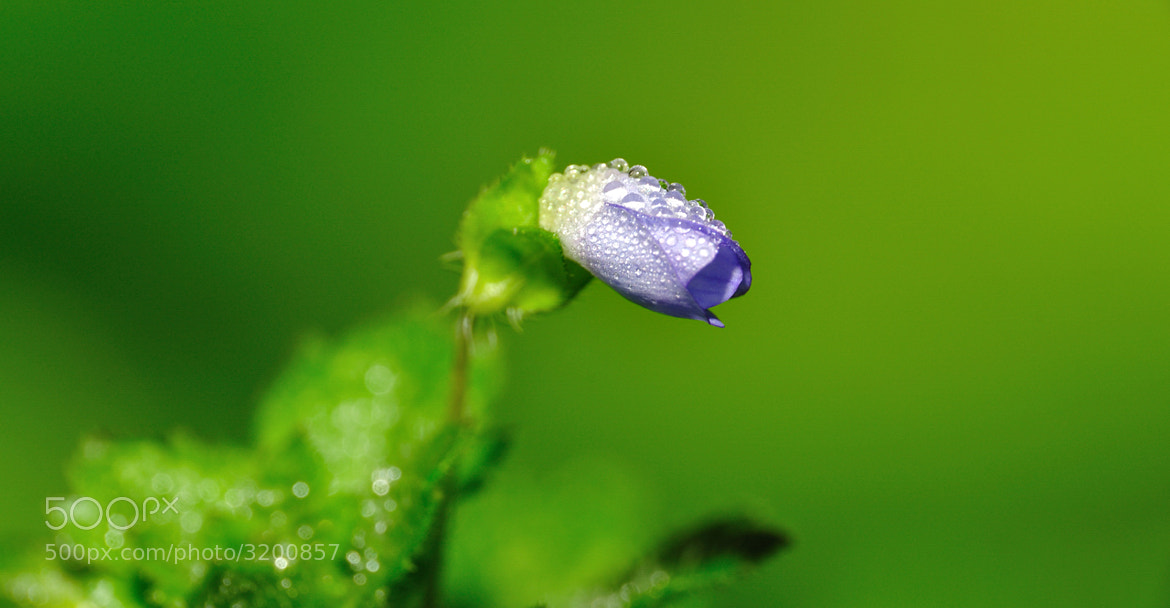 Photograph morning dew + floweret by HoHyun Lee on 500px