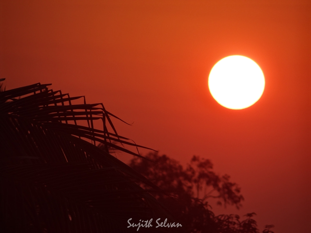 Photograph Pretty set.. by Sujith Selvan on 500px