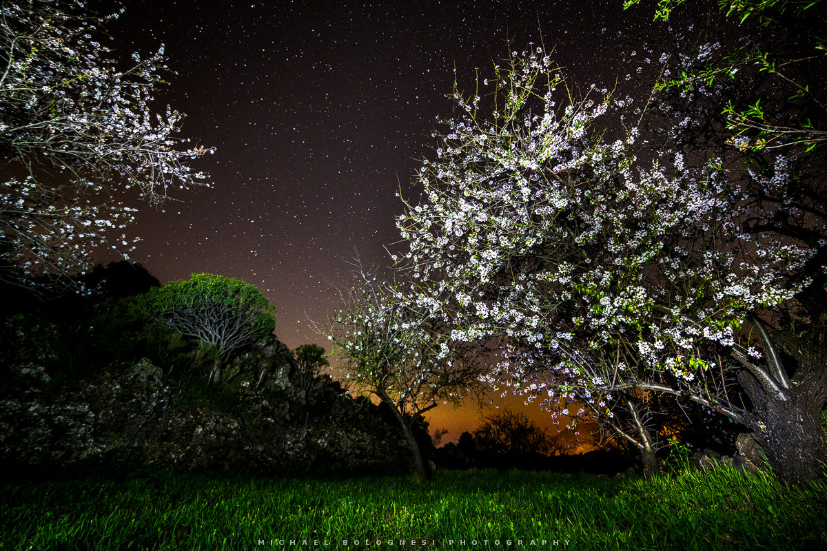 Photograph Almonds in the Dark by Michael Bolognesi on 500px