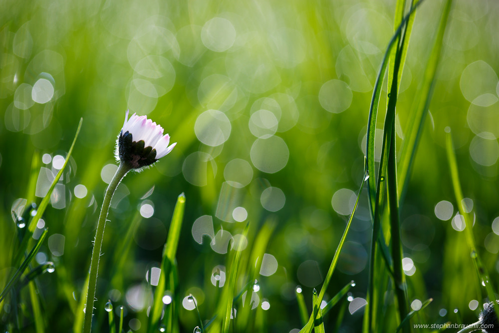 Photograph Walk me out in the morning dew today by Stephan Brauchli on 500px
