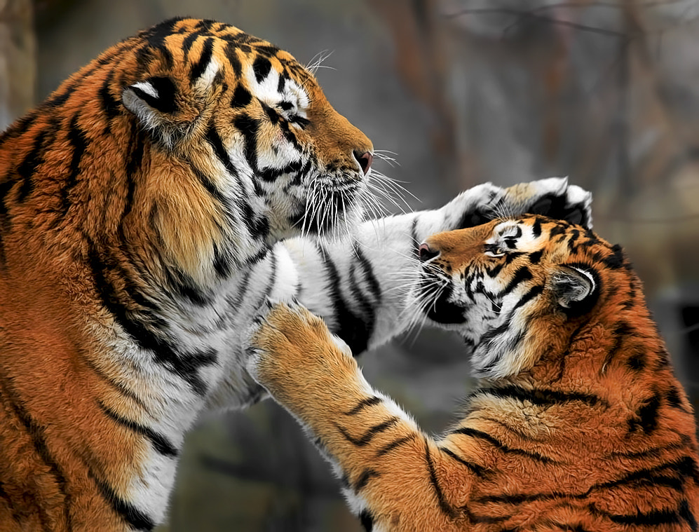 Photograph Love you, Mom! by Klaus Wiese on 500px
