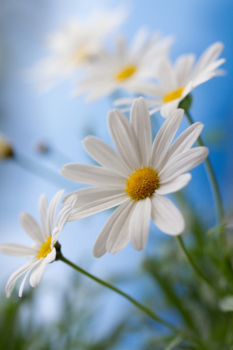 Photograph Feels like Summer by Mandy Disher on 500px