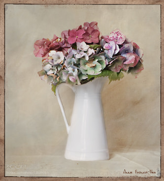 Photograph Mixed Hydrangeas by Anne Francis-Nee on 500px