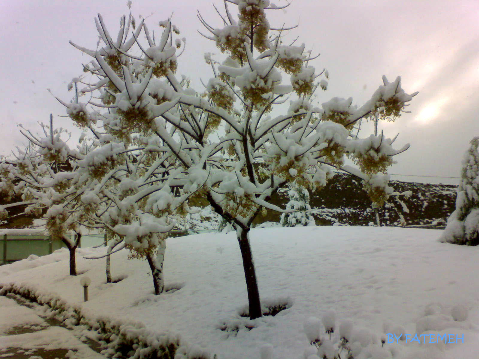 Photograph Snow by Fatemeh Za on 500px