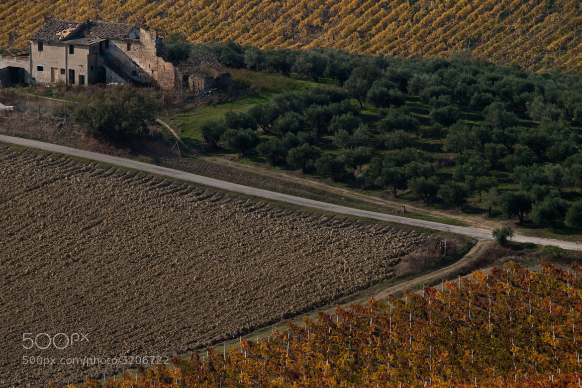 Photograph La Vigna a Nevembra (Sp'nitele) by Wolfgang Grilz on 500px