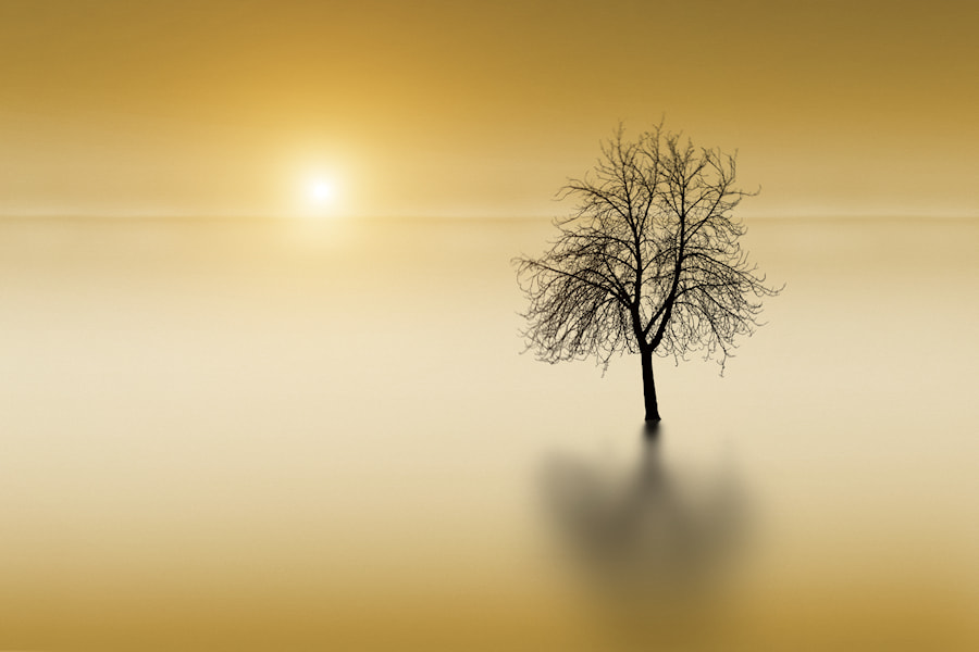 Trees Die Standing by Carlos Gotay on 500px.com