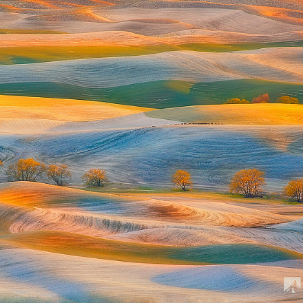 Spring Snow, Palouse