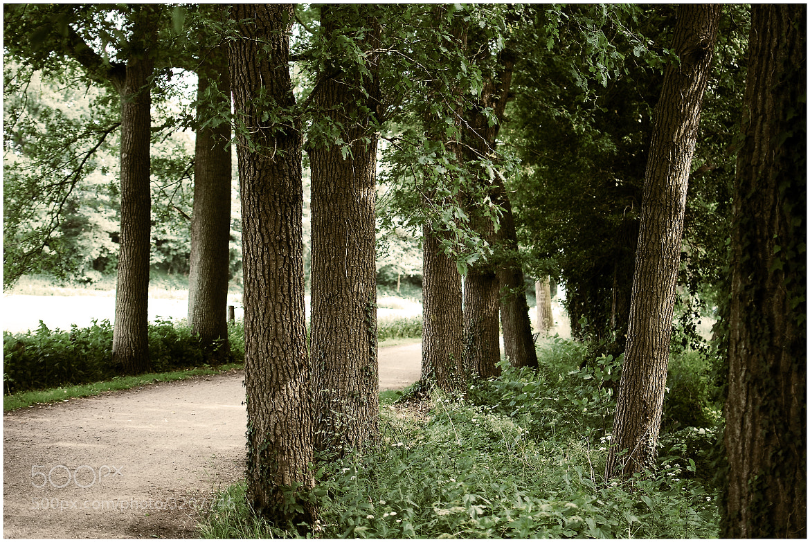 Photograph Allee by made by nicole on 500px