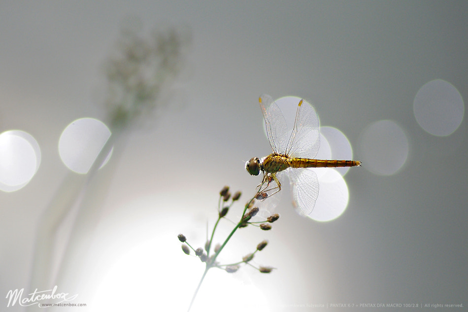 Photograph dragonfly at the pond by Matcenbox  on 500px