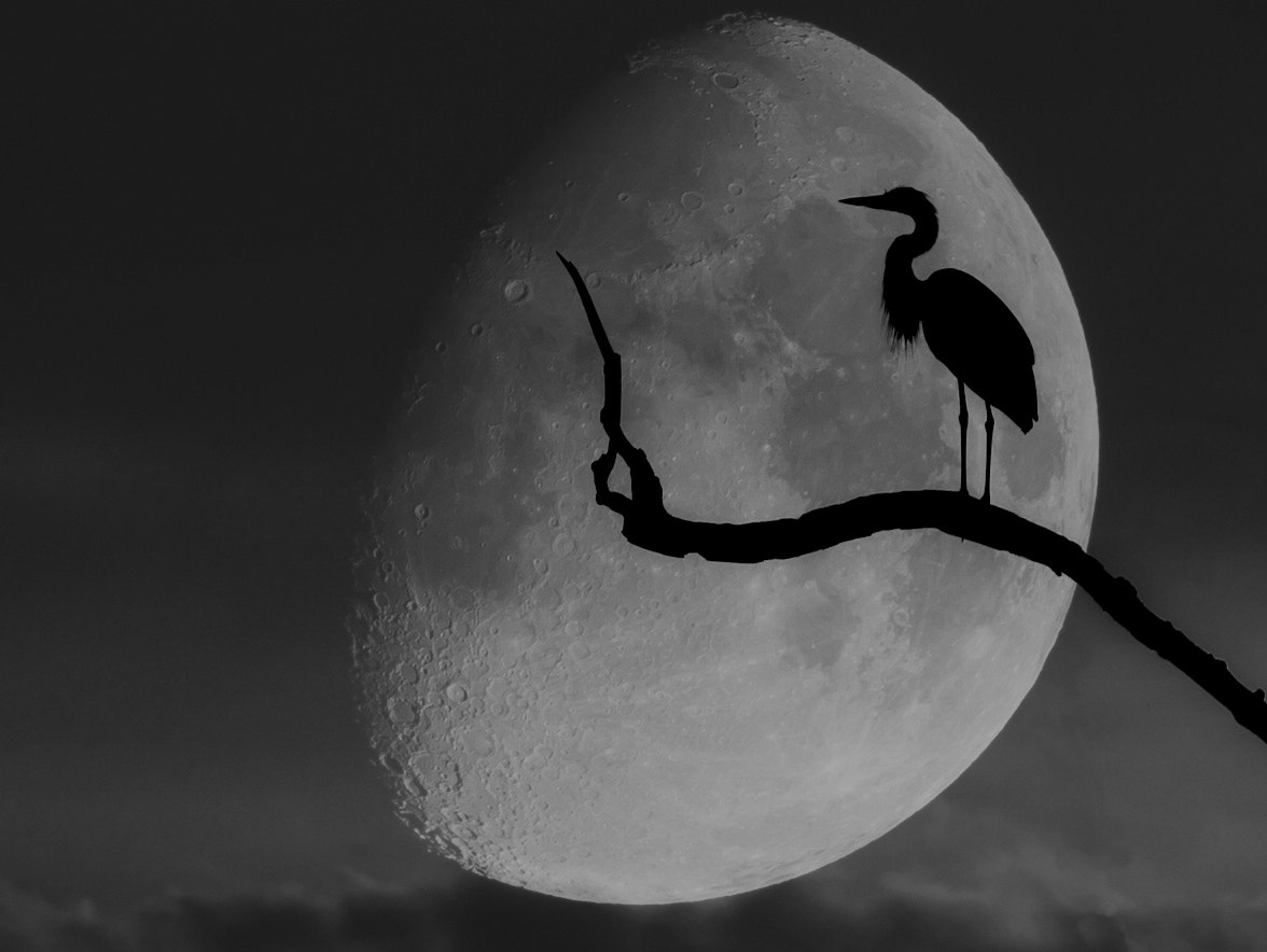Photograph Moon and the Black Bird by Tom Rogula on 500px