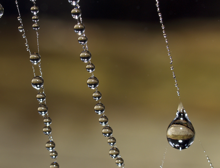 Photograph Dew Drop Pearls by Peter Baumgarten on 500px
