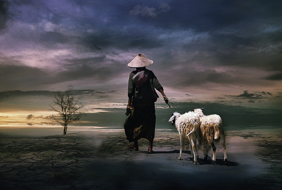 Photograph No Grass by 3 Joko on 500px