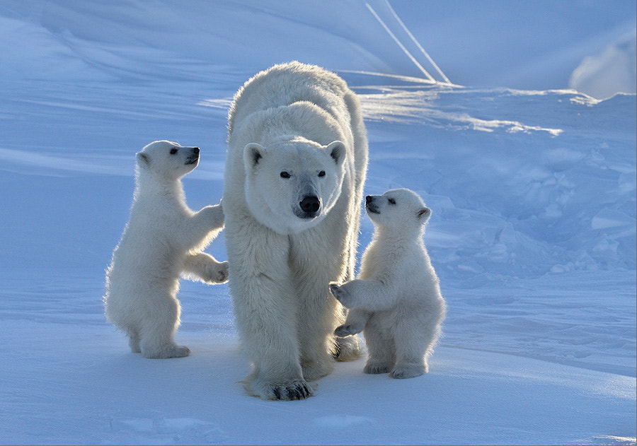 Photograph Our Mom is the best!  by Nikolai Zinoviev on 500px